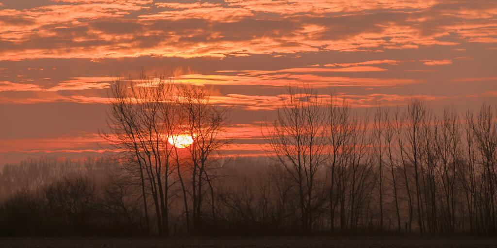Sonnenaufgang vor Baumgruppe