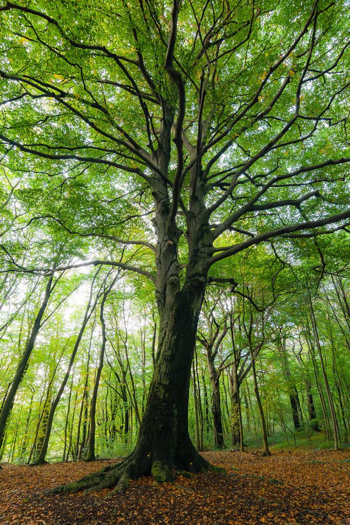 Baum im Trimm-Dich-Wald